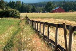 COWICHAN_TRAVEL_004.jpg Photos of a farm and fields in Glenora, Cowichan, B.C. Photo by Phil Ives/ Special to the Chronicle