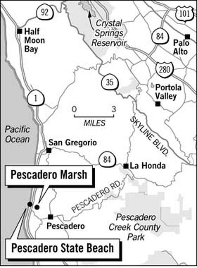 Pescadero Marsh Preserve. Chronicle Graphic