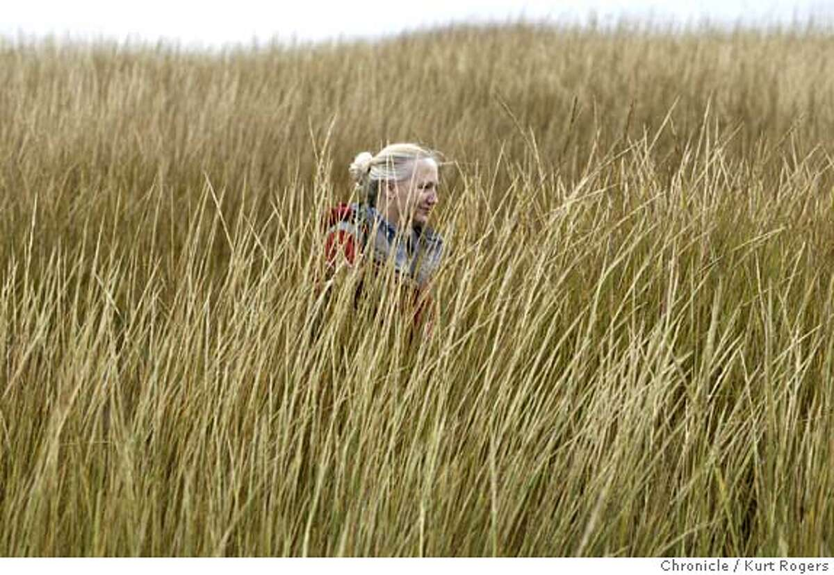 Peggy Olofson,up to her ears in Cordgrass.She is the director of the San Francisco Estuary Invasive Spartina Project, near tall, vigorous stands of the invading East Coast cordgrass on the shore of Alameda Island. CORDGRASS_0096_kr.JPG 11/4/04 in Alameda,CA. KURT ROGERS/THE CHRONICLE MANDATORY CREDIT FOR PHOTOG AND SF CHRONICLE/ -MAGS OUT Metro#Metro#Chronicle#11/7/2004#ALL#5star##0422451890