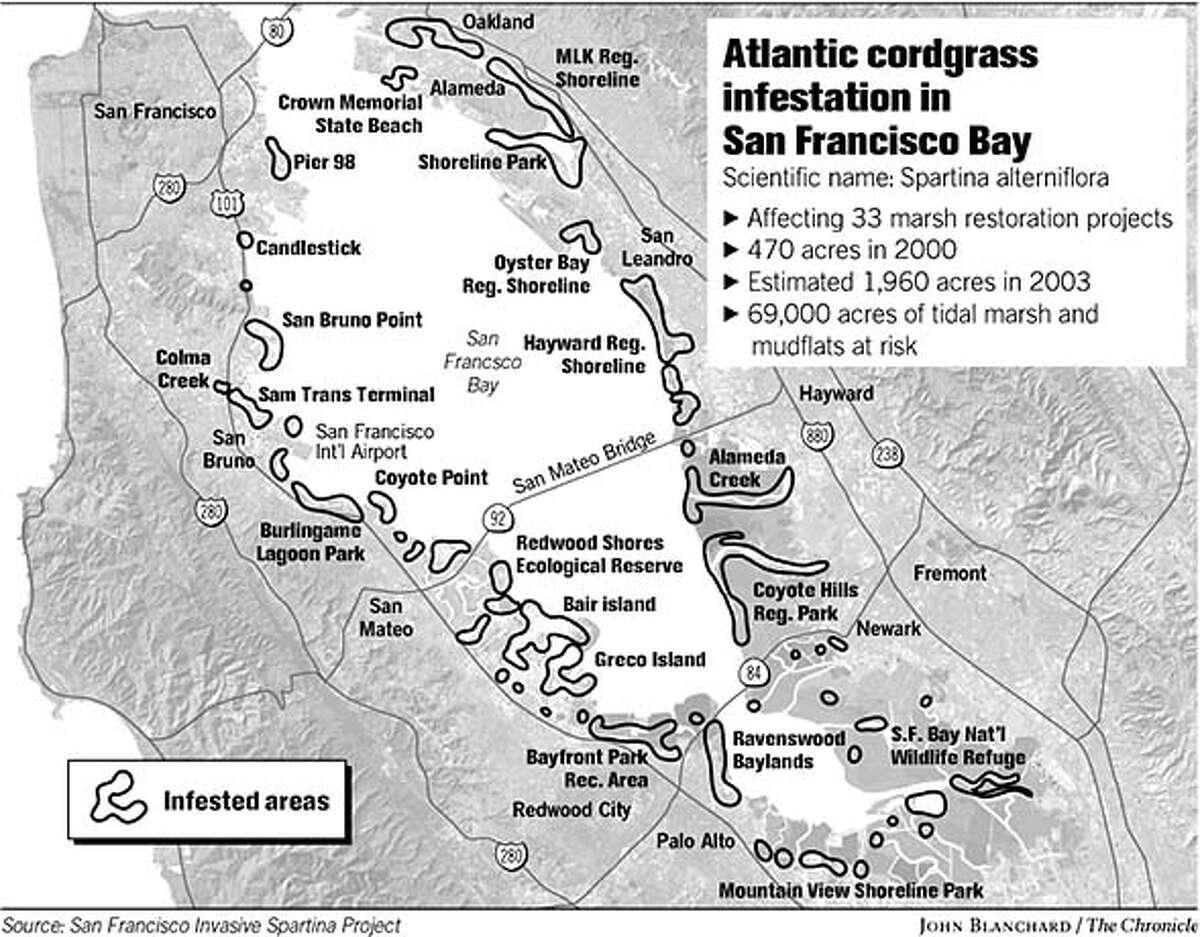 Atlantic Cordgrass Infestation in San Francisco Bay. Chronicle graphic by John Blanchard