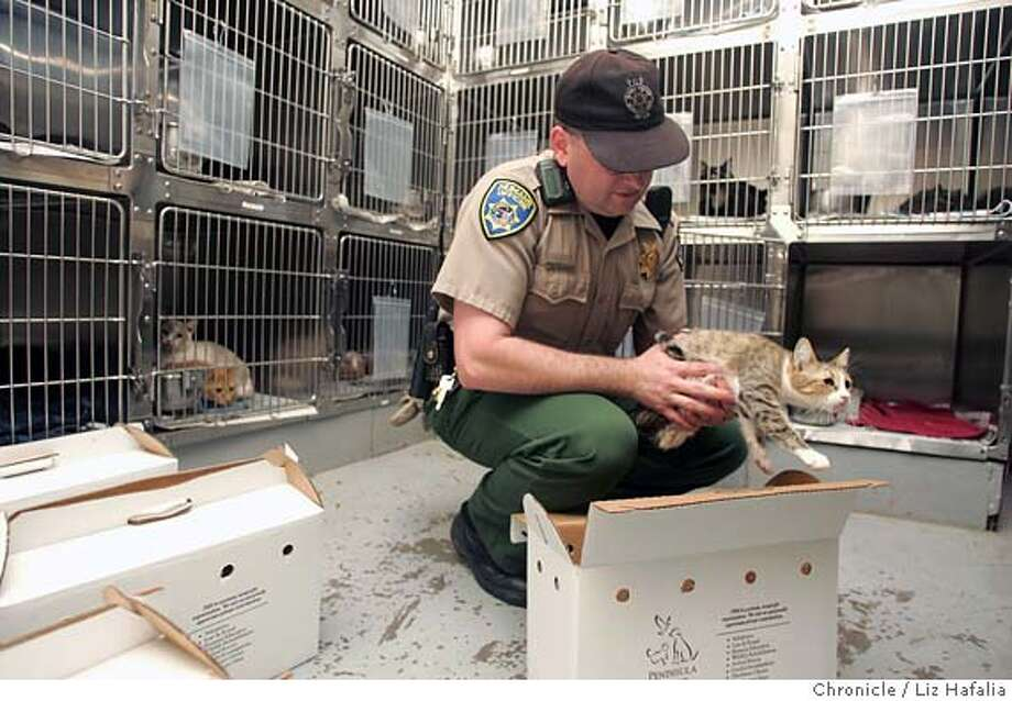 CATS_008_LH.JPG The Peninsula Humane Society took 80 cats out of a house in San Carlos. Humane officer Jeff Christner takes them out of their carriers and into their cages. � Shot on 11/5/04 in San Mateo. LIZ HAFALIA/The Chronicle MANDATORY CREDIT FOR PHOTOG AND SF CHRONICLE/ -MAGS OUT Metro#Metro#Chronicle#11/6/2004#ALL#5star##0422453493 Photo: Liz Hafalia