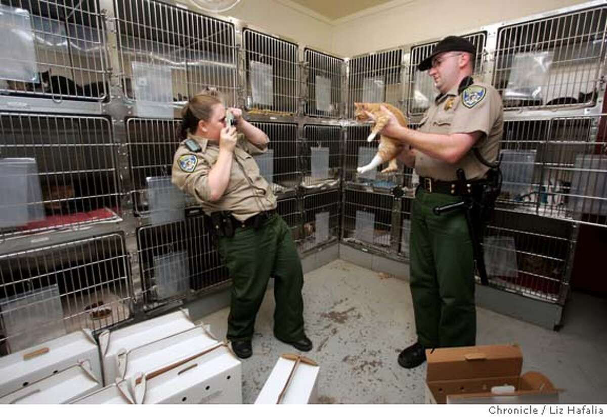 CATS_027_LH.JPG The Peninsula Humane Society took 80 cats out of a house in San Carlos. Humane officer Samantha Patterson (left) takes mugs of cats while officer Jeff Christner (right) takes them out of their carriers and into their cages. � Shot on 11/5/04 in San Mateo. LIZ HAFALIA/The Chronicle MANDATORY CREDIT FOR PHOTOG AND SF CHRONICLE/ -MAGS OUT Metro#Metro#Chronicle#11/6/2004#ALL#5star##0422453491