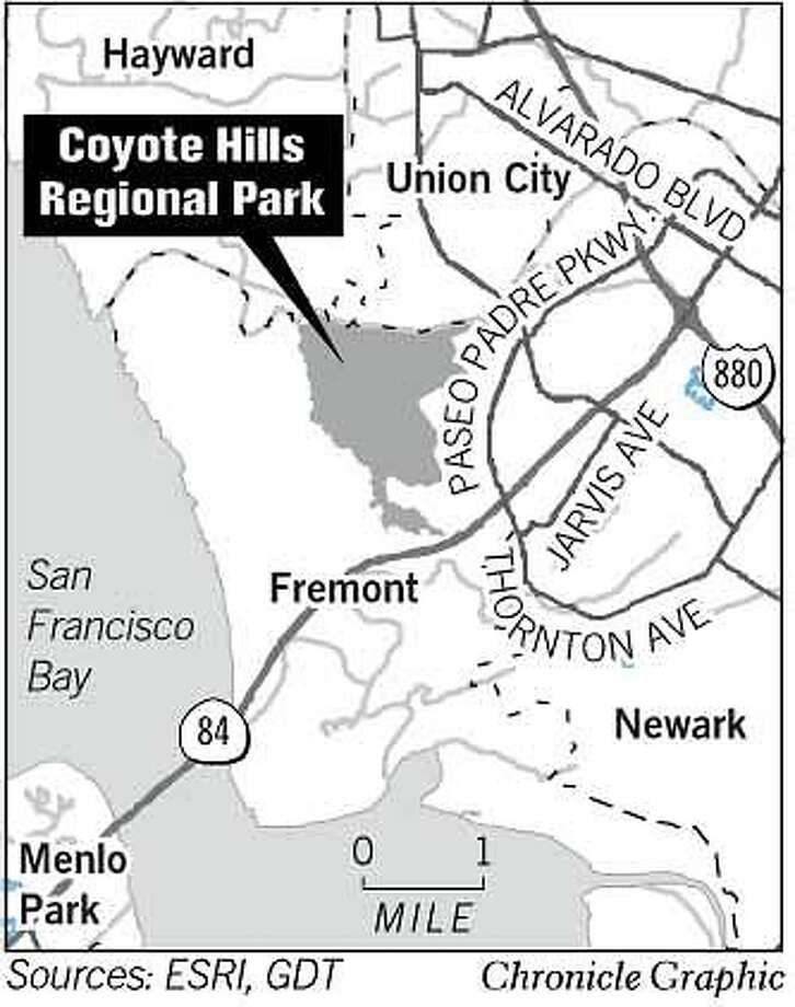 Coyote Hills Regional Park. Chronicle Graphic Photo: John Blanchard