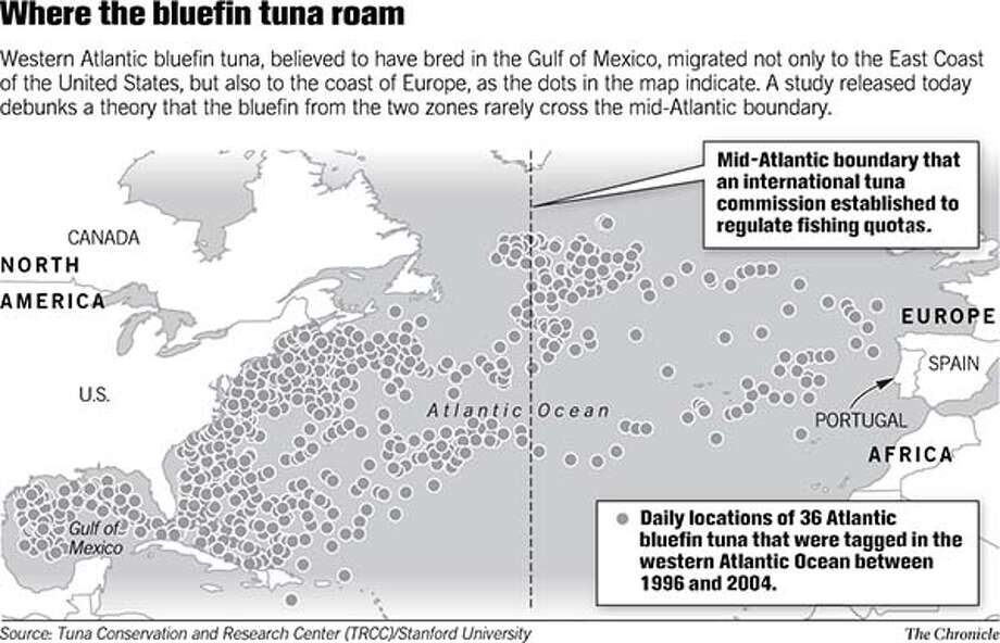 Where the Bluefin Tuna Roam. Chronicle Graphic