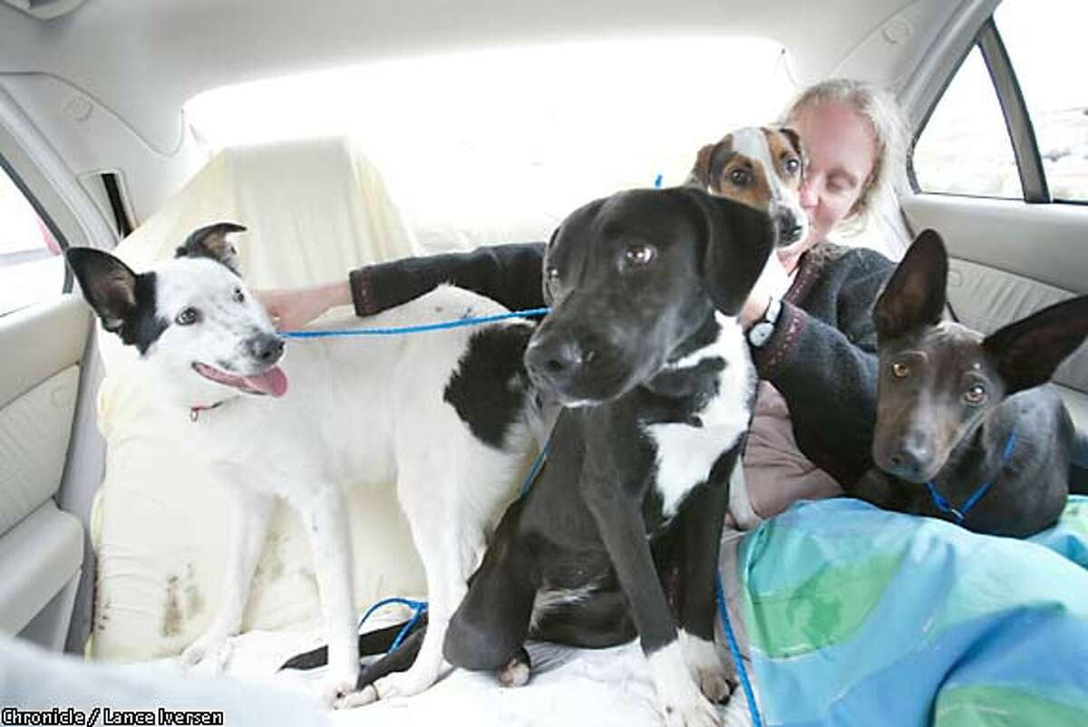 Saved: Four of the nine excited pooches rescued from the Sacramento shelter by a team from Pets Unlimited ride back to San Francisco with staff veterinarian Kathy Andres. The dogs will be put up for adoption in a program that has expanded with funding from Vanessa Getty. Chronicle photo by Lance Iversen