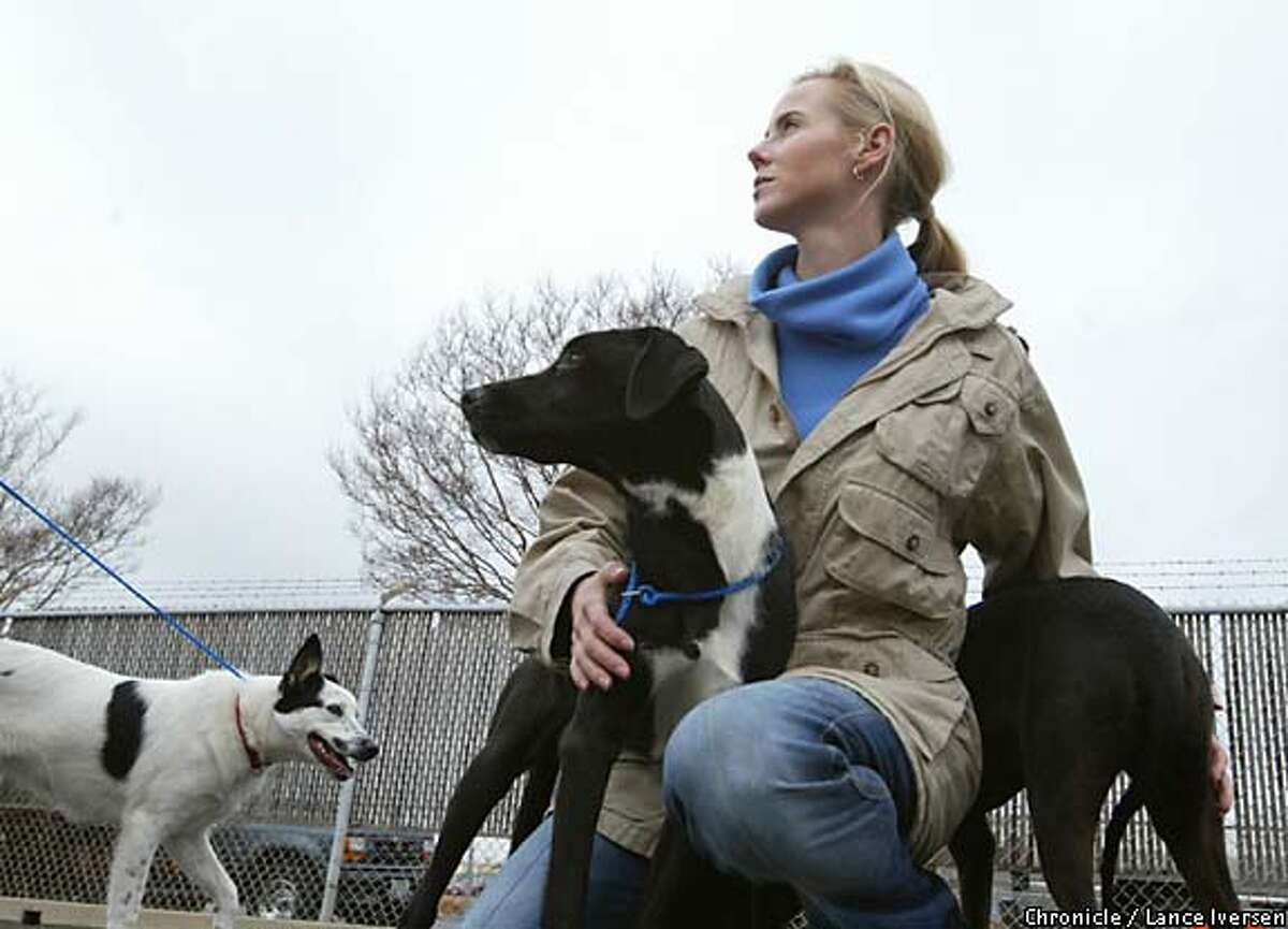 Rescuer: Vanessa Getty not only funds the rescue program at Pets Unlimited, she also goes with the crew weekly to bring dogs back from the overcrowded Sacramento County Animal Shelter. Chronicle photo by Lance Iversen