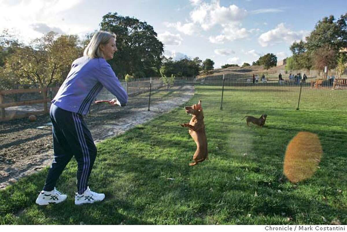 Michelle Cowels, who owns two small dogs and headed the movement to get the small dog park built in Danville plays with the dogs, Lucy(jumping) and Molly. When Spot, a 10-pound toy fox terrier, was killed by a much larger dog at Danville�s new $116,000 dog park in July, canine lovers lobbied Town Hall to create a dog park for small dogs so their Chihuahuas and toy terriers could romp in peace. They won, and last month the city opened a $60,000 park reserved just for canines 25 pounds and smaller. 10/27/04 in Danville. S.F. Chronicle photo by Mark Costantini. Metro#Metro#Chronicle#10/30/2004#ALL#5star##0422437811