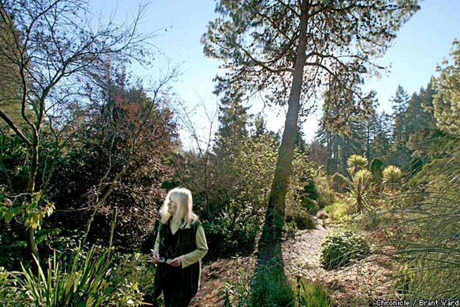 Rare Plants: Maggie Wych walks past a Eucalyptus rubidor from Australia at her Western Hills Rare Plant Nursery. Chronicle photo by Brant Ward
