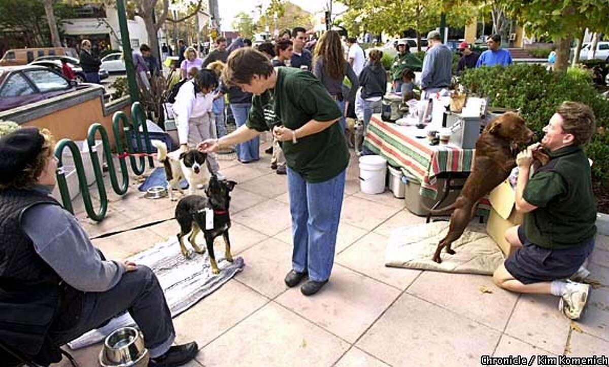 The Milo Foundation regularly sets up an adoption center on Berkeley's Fourth Street, where Tingle's four-legged charges have become a popular attraction. Chronicle photo by Kim Komenich