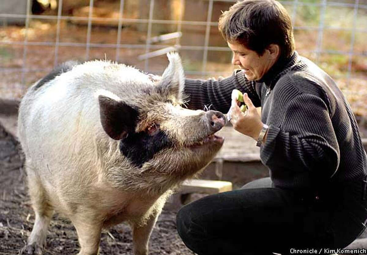 Lynne Tingle, founder of the Milo Foundation, feeds Lily the pig, at her no-kill animal shelter near Willits (Mendocino County). Chronicle photo by Kim Komenich