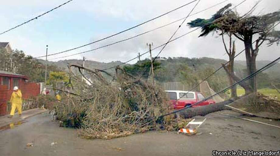 STORM17b-c-17DEC02-MT-LM  A tree that fell across Clarendon road in Pacific that brought down power lines. Pacific city employeeThomas Klinger, far left, walks past the damage.  Storm aftermath. Photos by Liz Mangelsddorf/ SF Chronicle Photo: Liz Mangelsdorf