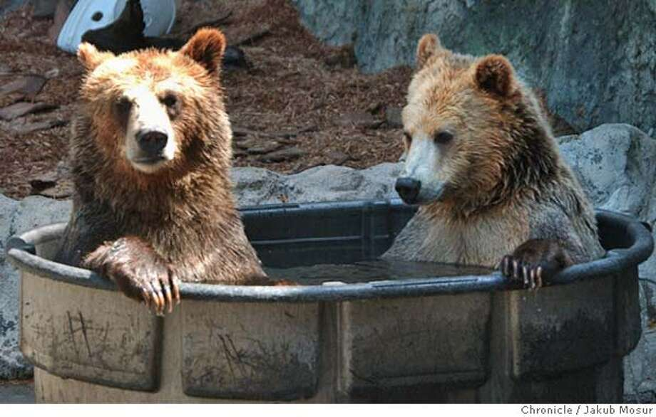 GRIZZLY02_JMM.JPG  The two new female grizzly bears sit in a tub of water at the San Francisco Zoo.  Event on 4/15/05 in San Francisco. JAKUB MOSUR / The Chronicle MANDATORY CREDIT FOR PHOTOG AND SF CHRONICLE/ -MAGS OUT Photo: JAKUB MOSUR