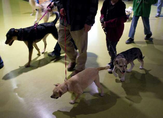 Corridors at the AT&T Center are taken over by four-legged pedestrians as hockey fans bring their dogs to The Rampage Pucks & Paws Night, Saturday, January 21, 2012. Dog rescue and adoption groups from throughout the region were also on hand encouraging dog adoption. Photo: J. MICHAEL SHORT, SPECIAL TO THE EXPRESS-NEWS / THE SAN ANTONIO EXPRESS-NEWS