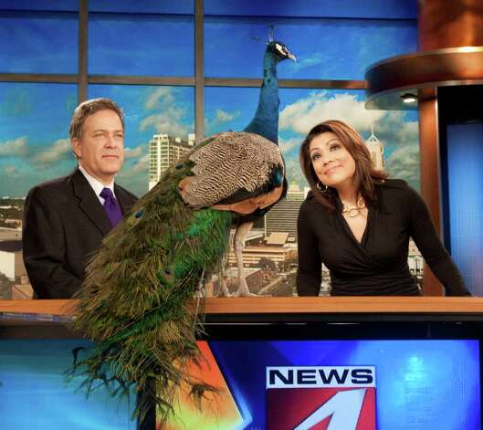 Anchors Randy Beamer and Elsa Ramon clown around with the NBC peacock. Photo: WOAI