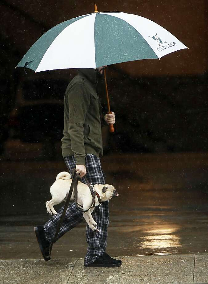 Portable puggage: When Jack refuses to walk in the rain in Los Angeles, Justin Bonderach has to carry him like a satchel. Photo: Damian Dovarganes, Associated Press