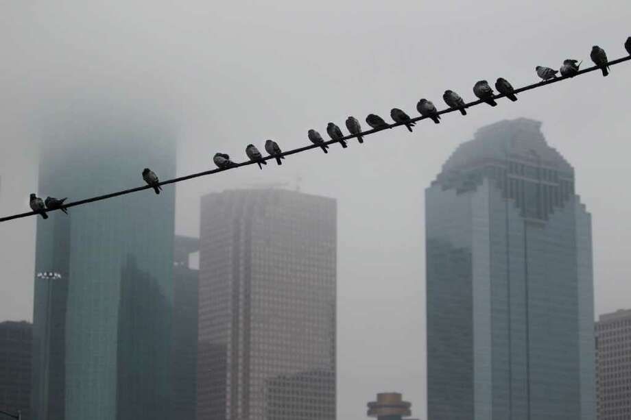 Pigeons rest on a utility wire near downtown where clouds are moving in for tonight's predicted rain on Tuesday, Jan. 24, 2012, in Houston. ( Mayra Beltran / Houston Chronicle ) Photo: Mayra Beltran / © 2012 Houston Chronicle