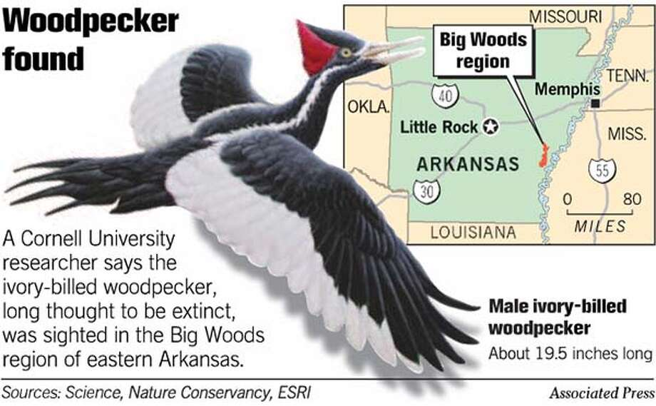 Woodpecker Found. Associated Press Graphic