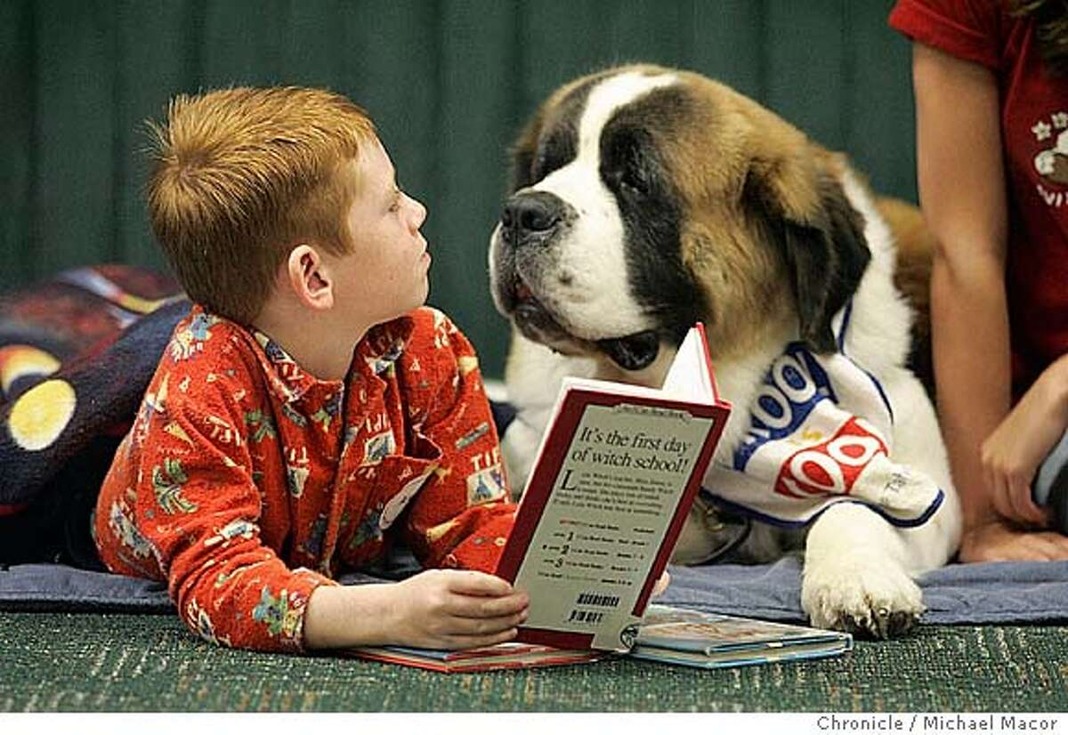 """7 year old Alec Gauthier makes sure that '""""Willow"""" a St. Bernard, is listening to every word. PAWS to Read program at the Pleasanton Public Library. Children practice their reading skills in a program that matches kids up with dogs from the local animal shelter. 10/5/04 Pleasanton, CA Michael Macor / San Francisco Chronicle"""