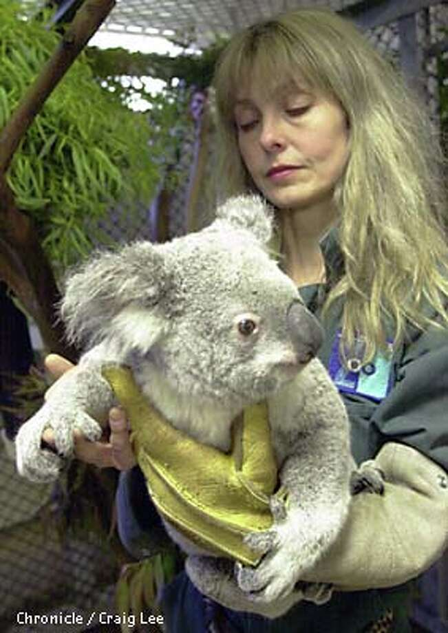 Zookeeper Nancy Rumsey embraced Leanne, one of the koalas stolen in San Francisco. Chronicle photo by Craig Lee