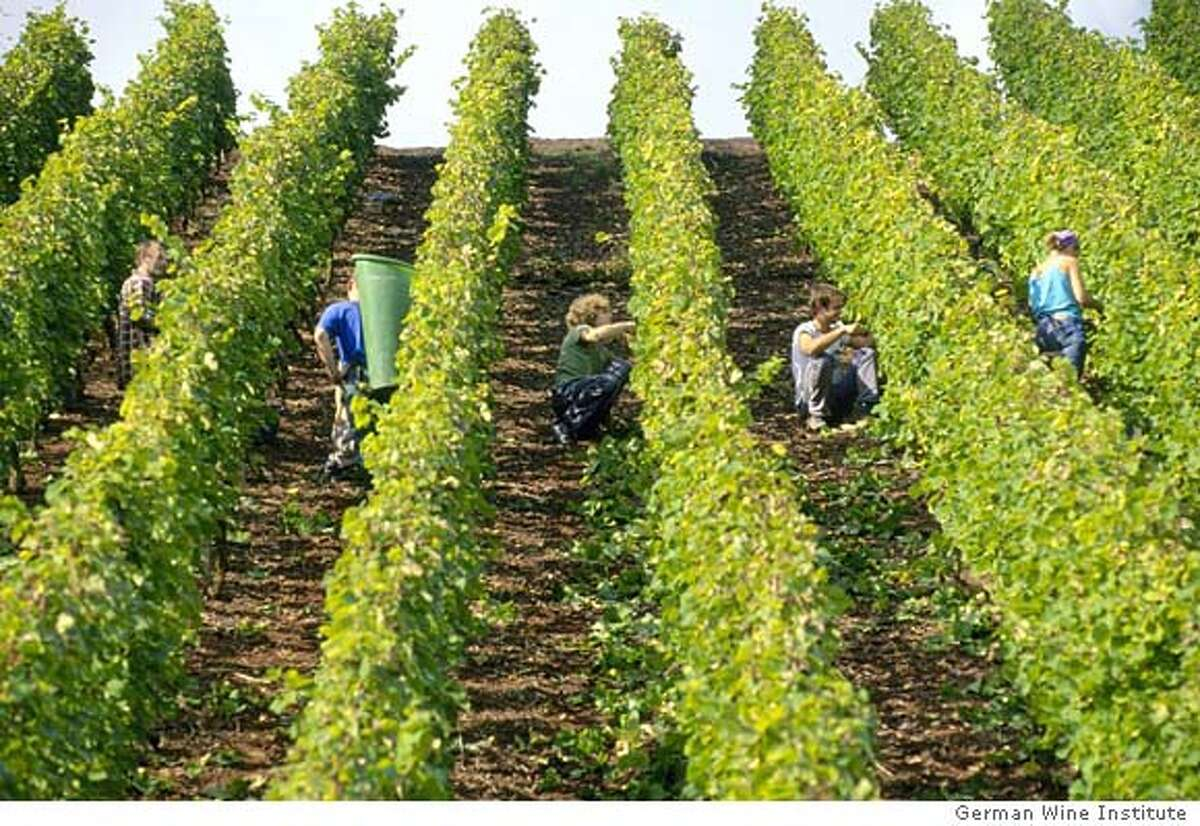 MOSELPICK19 For MOSEL19, Wine ; Workers cling to the steep hillside vineyards in the Mosel-Saar-Ruwer region to harvest Riesling grapes for the 2001 vintage. Courtesy: German Wine Institute ; For: CENTERPIECE for June 19; Inserted into mediagrid on 6/12/03 in . / German Wine Institute 2 each, pls