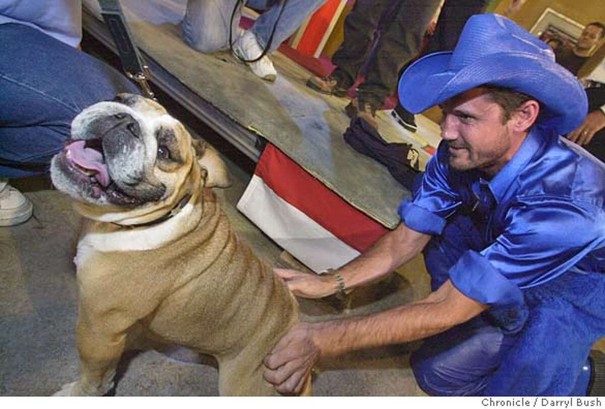 """fringe073_db.jpg Candidate Trek Thunder Kelly, a performance artist, plays with """"Nellie,"""" a bulldog, prior to taping on the set at the Game Show Network's, """"Who Wants to be Governor of California?"""" game show. 10/7/03 in Culver City. DARRYL BUSH / The Chronicle"""