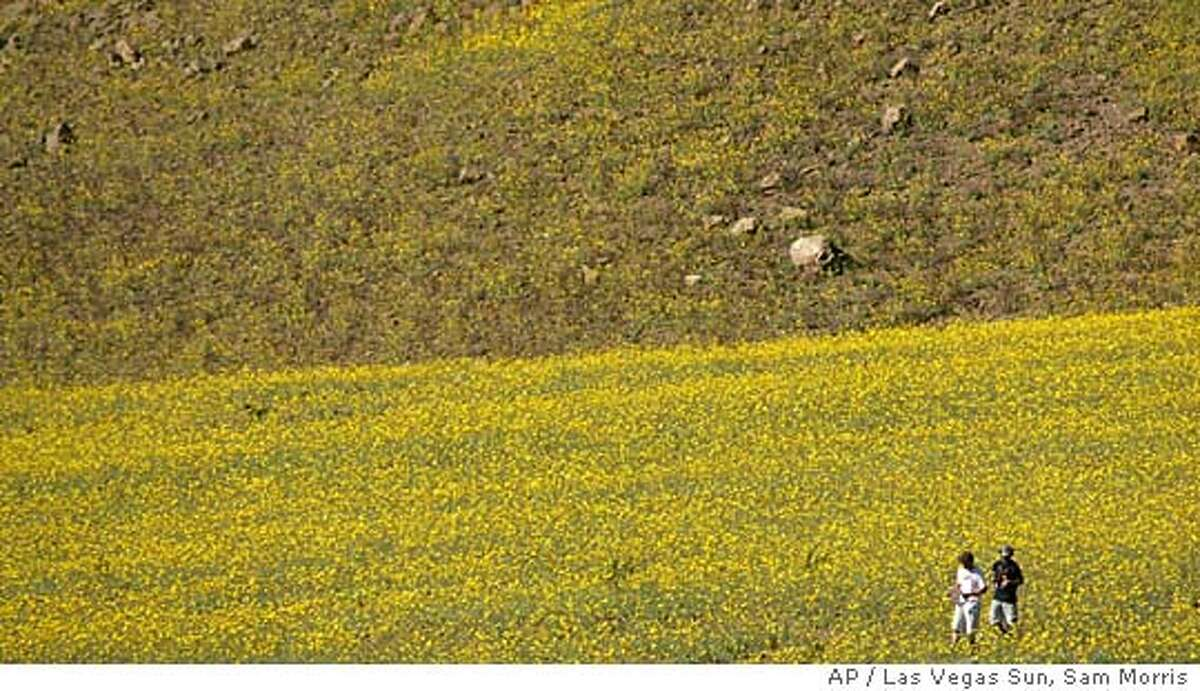 Sightseers walk through a field of wildflowers in Death Valley National Park Monday, March 7, 2005. Heavy winter rains have led to an explosion of wildflowers throughout the usually barren landscape. SAM MORRIS / LAS VEGAS SUN