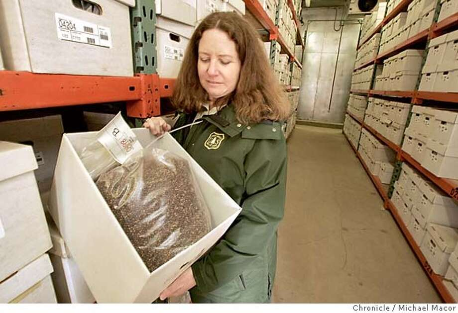 """US Forest Service Nursery Manager, Pat Trimble, holds just one box of seeds, (212,500 seeds) 25 pounds, in storage since 1991, collected from the Shasta-Trinity Forest. The """"Ponderosa Pine"""" seeds are kept with thousands of others inside this warehouse in which the temperature is kept at O degrees. Science page story about likely merger of state and federal seedbanks, crucial repositories for the seeds of native plants and trees, used to help reforest lands after logging or fires. US Forest Service Nursery and seed bank in Placerville, Ca. 2/24/05 Placerville, Ca Michael Macor / San Francisco Chronicle Photo: Michael Macor"""