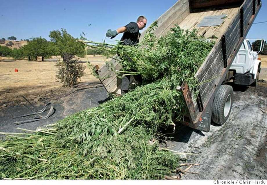Solano county deputies burning tons of marijuana conficated from a bust in the hills behind Vacaville  Chris Hardy / San Francisco Chronicle Photo: Chris Hardy