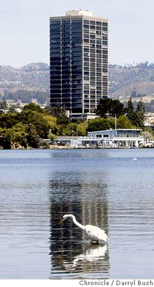An egret hunts for food in Lake Merritt with the high rise condo accross Lake Merritt, the Park Bellevue Tower. 8/25/04 in Oakland  Darryl Bush / The Chronicle Photo: Darryl Bush