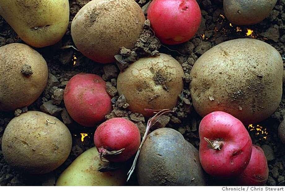 "POTATO 2/24JUL95/FD/MACOR ""New Potatoes"" Chronicle Photo: Michael Macor CAT Photo: CHRIS STEWART"