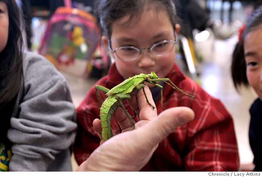 Zette Ozaki looks over the Giant Thorny Phasmid from the rainforest during the Discovery Lab presentation at the Japanese Bilingual-Bicultural Program West school, Thursday Feb.10, 05. kids will be visited by insects from the Insect Discovery Lab at the Center for Ecosystem Survival on Potrero Hill in SF. The lab breeds exotic insects, spiders and other creatures for its classroom roadshow. Presenter from the Discovery Lab will be Norman Gershenz, executive director. LACY ATKINS/SAN FRANCISCO CHRONICLE Photo: LACY ATKINS