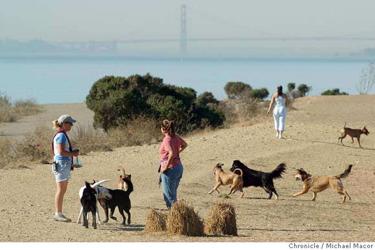 parksdogs024_mac.jpg Chris Matthews, left of Richmond is a professional dogwalker who brings all 5 of her dogs to run free in the park. Sharon Flynn, (talking with Matthews), of Oakland brings her 2 dogs for a run around the park. Point Isabel Regional Shoreline in Richmond is a place where people can let their dogs run free without a leash.The East Bay Regional Parks system of the Bay Area encompasses more than 95,000 acres. 10/28/03 in Richmond. MICHAEL MACOR/ The Chronicle MANDATORY CREDIT FOR PHOTOG AND SF CHRONICLE/ -MAGS OUT