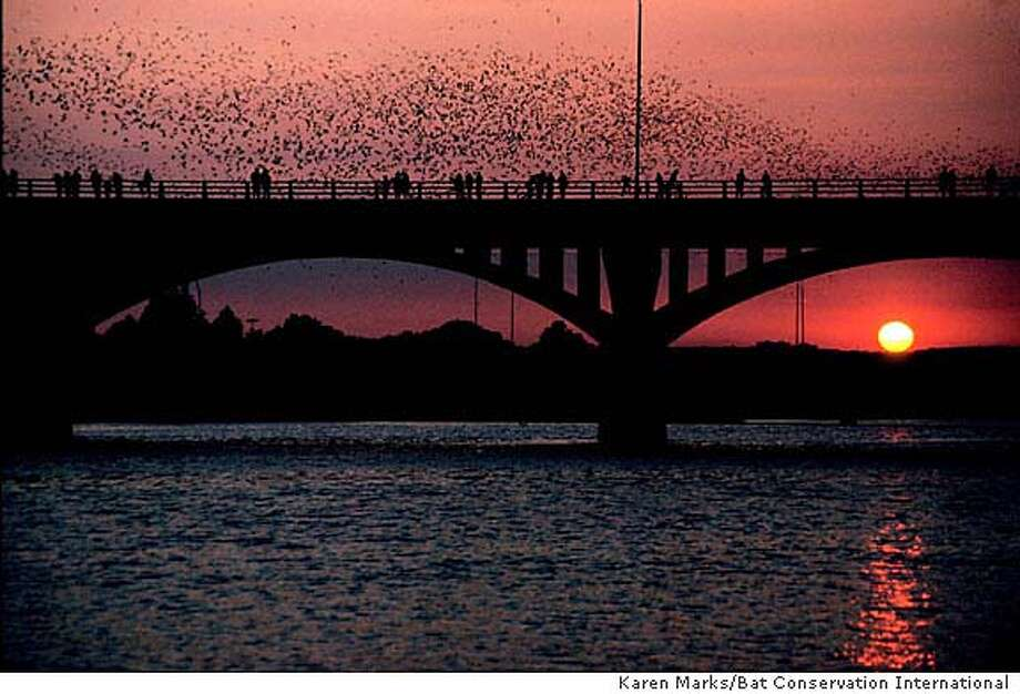 Speaking of Ozzy.... There are more bats than people during the summer in Austin. Amazing!   Photo: Karen Marks
