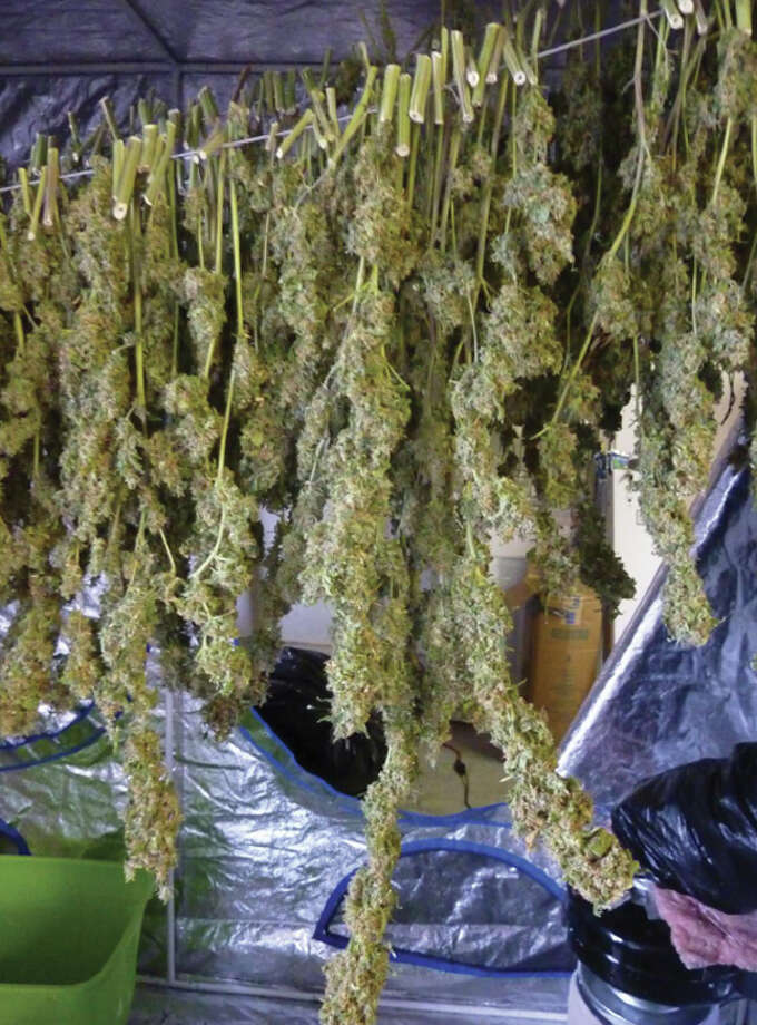 Drying marijuana at a home in rural Bow, Washington, pictured in a U.S. Justice Department photo. The federal government spends billions of dollars each year trying -- unsuccessfully -- to stamp out grow operations. Photo: Department Of Justice