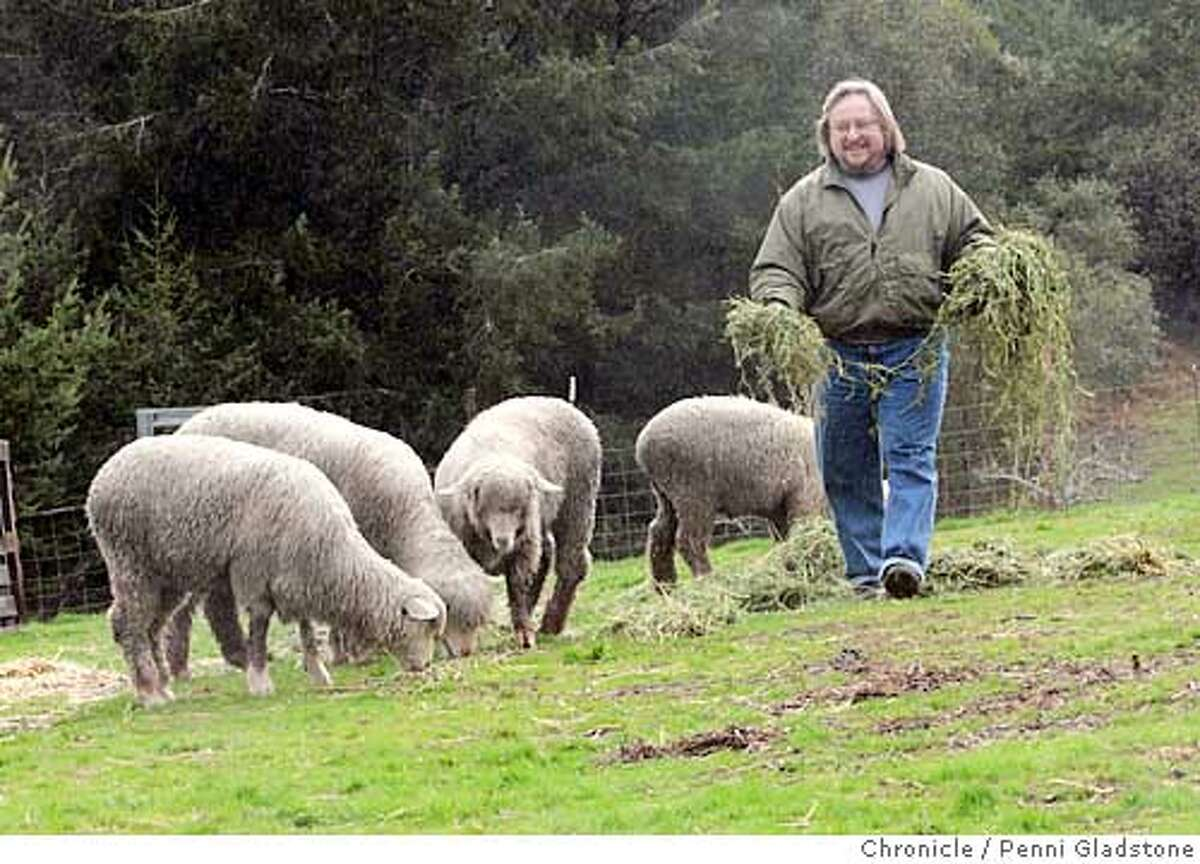 Sparks sets out feed for the sheep. Steve Sparks, a Brit who used to own the Mad Dog in the Fog pub in the Lower Haight. He and his wife up and moved to Mendocino The San Francisco Chronicle, Penni Gladstone Photo taken on 1/10/05, in Mendocino, CA.