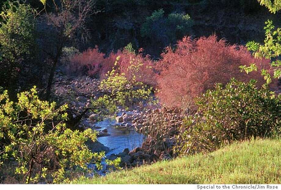 WILDSPOT25-C-XXMAR01-SP-JR- REDBUD FLOWERING ON CACHE CREEK. PHOTO BY JIM ROSE/SPECIAL TO THE CHRONICLE