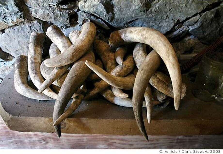 biodynamic25047_cs.jpg Cow horns are stored in a prep cellar in a 50-year-old barn at Bonterra Vineyards at McNab Ranch near Ukiah. Chris Stewart / The Chronicle Photo: Chris Stewart