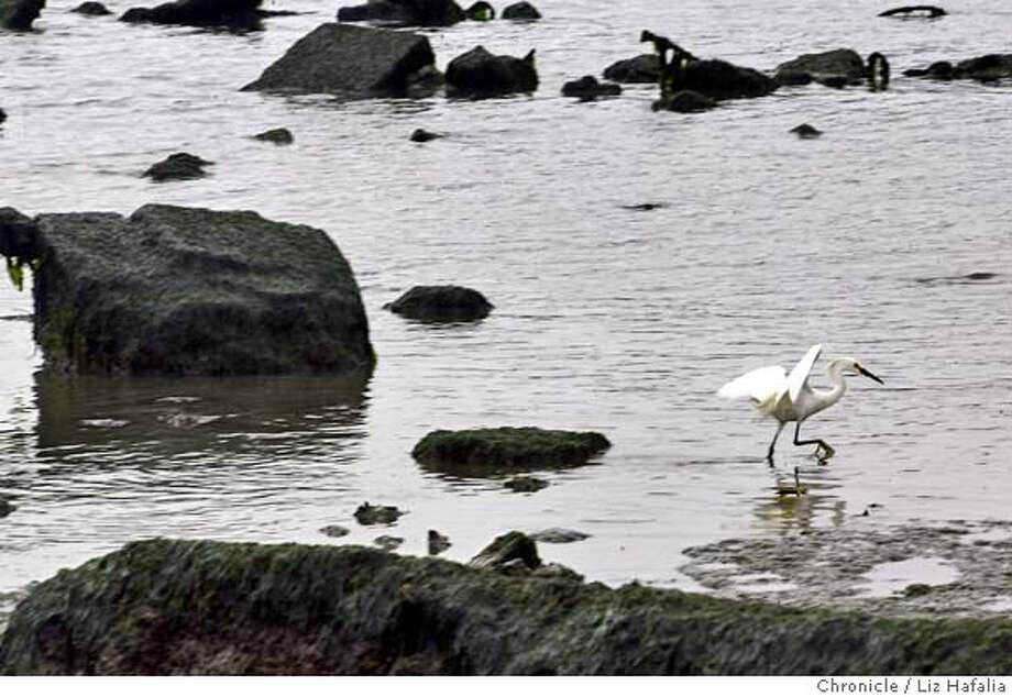 Five years ago, San Francisco officially opened Heron's Head Park, an unlikely preserve built on a giant pile of rubble. It's been turned into a teeming community of native plants and shorebirds. Shot on 5/26/04 in San Francisco. LIZ HAFALIA / The Chronicle Photo: LIZ HAFALIA