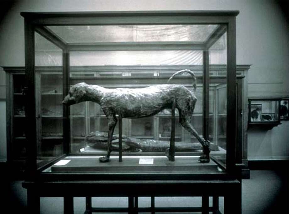 Photographer Richard Barnes, searching for behind-the-scenes stories in exhibits, found this mummified dog in the Cairo Museum.
