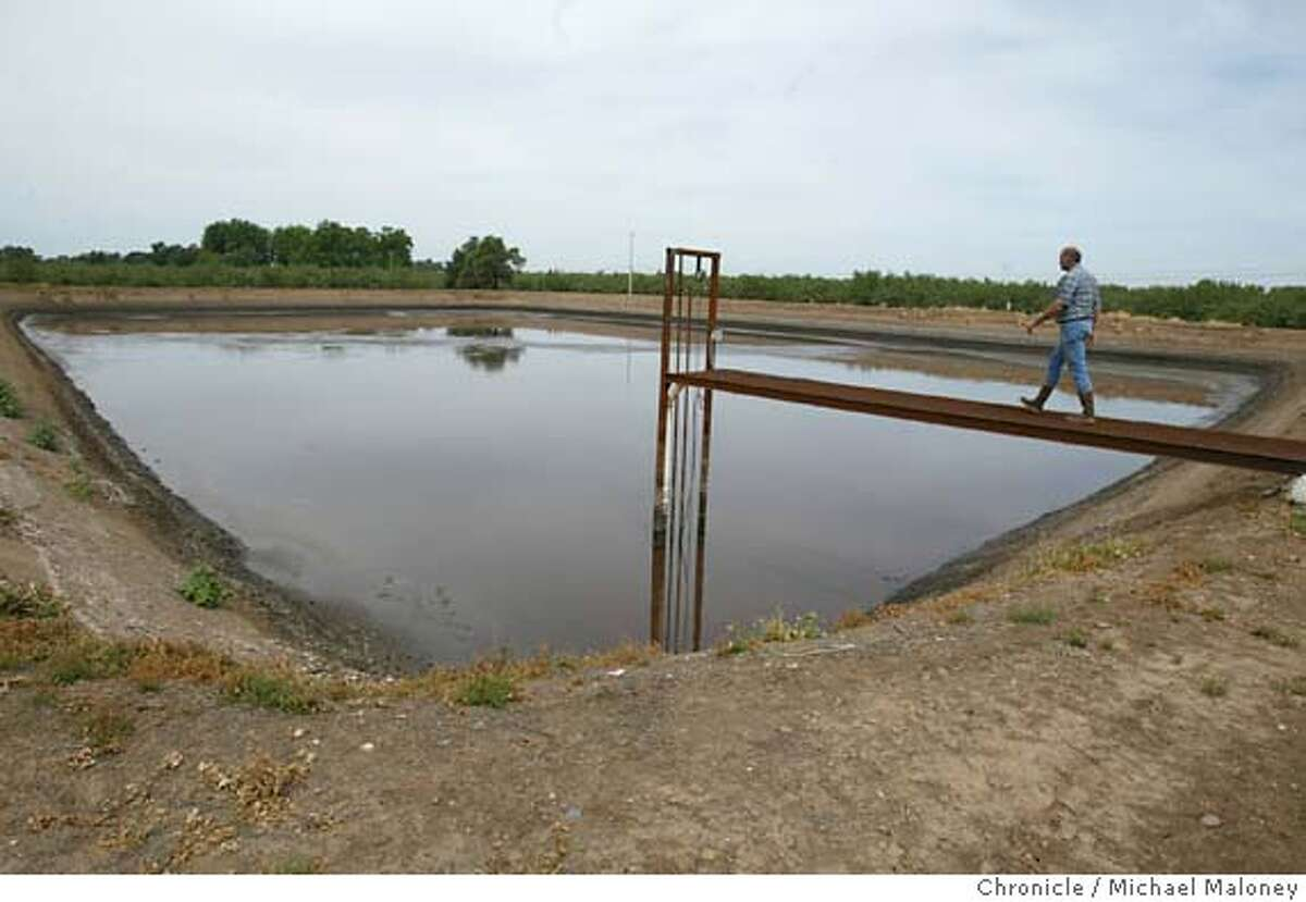 Leo Lagerwarf walks out on a catwalk over an irrigation pond - the liquid remains of the digester process. The water will be used to fertilize his crops. The Langerwerf Dairy near Durham, CA has a lot of cows and with it, tons of manure. But Leo Langerwerf, the owner and a 2nd generation dairyman from Holland came up with an alternative method of waste management. The 800-cow operation not only produces milk but also enough energy to run the dairy, the Langerwerf's home, and sell the excess to Pacific Gas & Electric Co. The Langerwerfs are able to generate this energy by using an anaerobic methane digester, which converts the cow dung to methane gas. Photo by Michael Maloney / San Francisco Chronicle