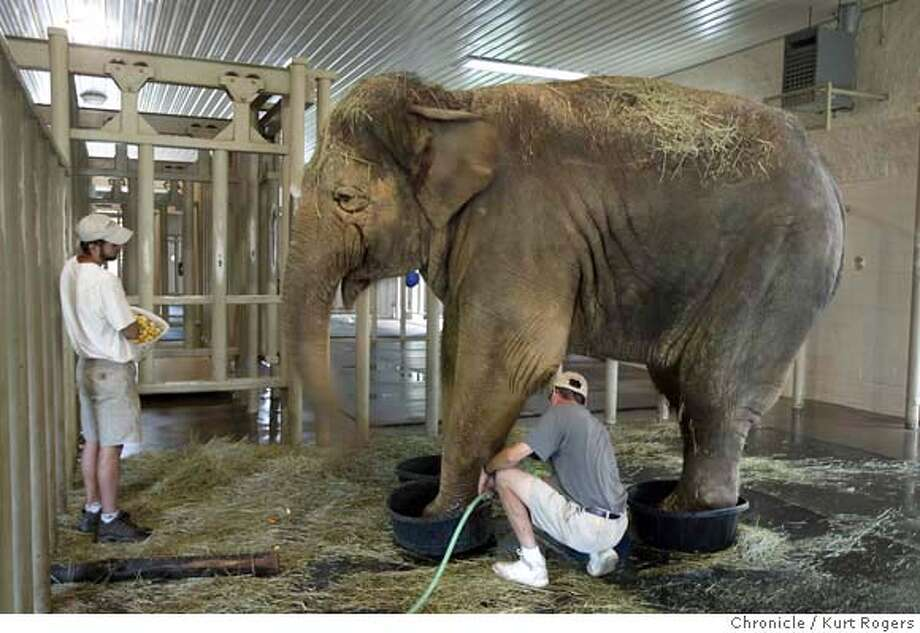 Scott Blais feeds Tina cut fruit as Keeper John Sheffield soaks her feet .She gets this treatment twice a day. Years being cooped up in a small pen and hard floors have taken there toll on her feet.  She likes it inside where there are rubber matts on the floor. a happy Elephant now.  The Elephant Sanctuary in Hohenwald TN. 6/15/04 in Hohenwald,TN.  Kurt Rogers/The Chronicle Photo: Kurt Rogers