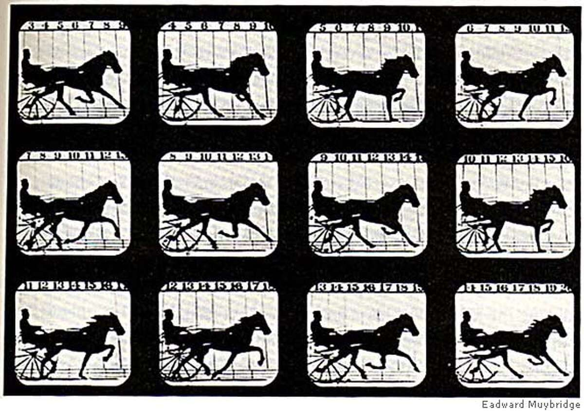 eadward muybridge, Occident Trotting, from The Attitudes of Animals in Motion, 1881