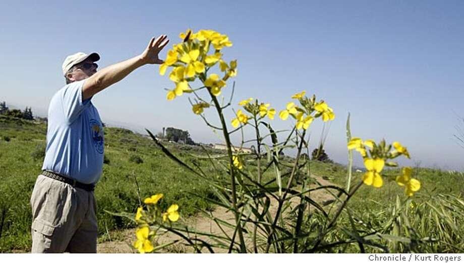 Mike Krieg a volunteer with the U.S Fish & Wild life lead a morning walk in Antioch Dunes he points out a Contra Costa Wallflower.  Walks at Antioch Dunes National Wildlife Refuge. 3/12/05 in Antioch,CA.  KURT ROGERS/THE CHRONICLE Photo: KURT ROGERS