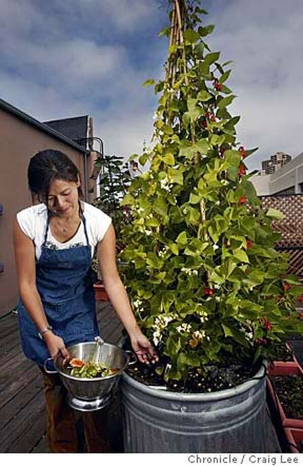 Intern Judy Wu harvesting and picking through the rooftop garden of the Food and Wine department. Photo of her picking purple basil. Nesturgeons, chive flowers and calendula are in the colander. Event on 7/30/04 in San Francisco. Craig Lee / The Chronicle Photo: Craig Lee