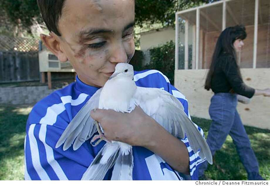 saleh_156_df.JPG  Saleh holds his new dove. He now has 3 doves and 12 carrier pigeons. Leslie Troutner (at right) has been like a second mother to Saleh. Saleh Khalef, 10, finds out his mother and siblings have been granted asylum to come join he and his father, Raheem in Oakland. Saleh was severely injured in a blast in Iraq a year ago October 10, 2003.  Deanne Fitzmaurice / The Chronicle Photo: Deanne Fitzmaurice