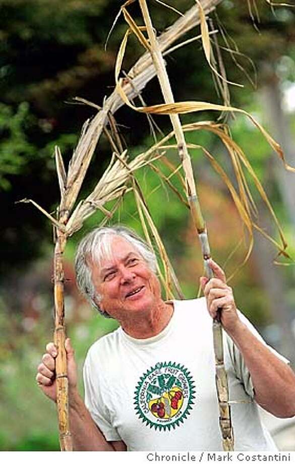 Story is about a man, Ray Bruman, who grows sugarcane in Berkeley. He has some large canes in pots, as well as seedlings. Portrait of him with his sugar cane. Event on 9/30/04 in Berkeley. Photo: Mark Costantini/S.F. Chronicle Photo: Mark Costantini