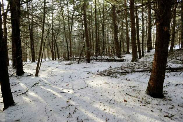 A wooded area in Hinsdale, N.H., shown here Thursday, Jan. 26, 2012, the place where the late Edward Kondrat discovered the body of murder victim Mary Harrison, a Greenwich native, in the woods on Oct. 30, 1981. Photo: Bob Luckey / Greenwich Time