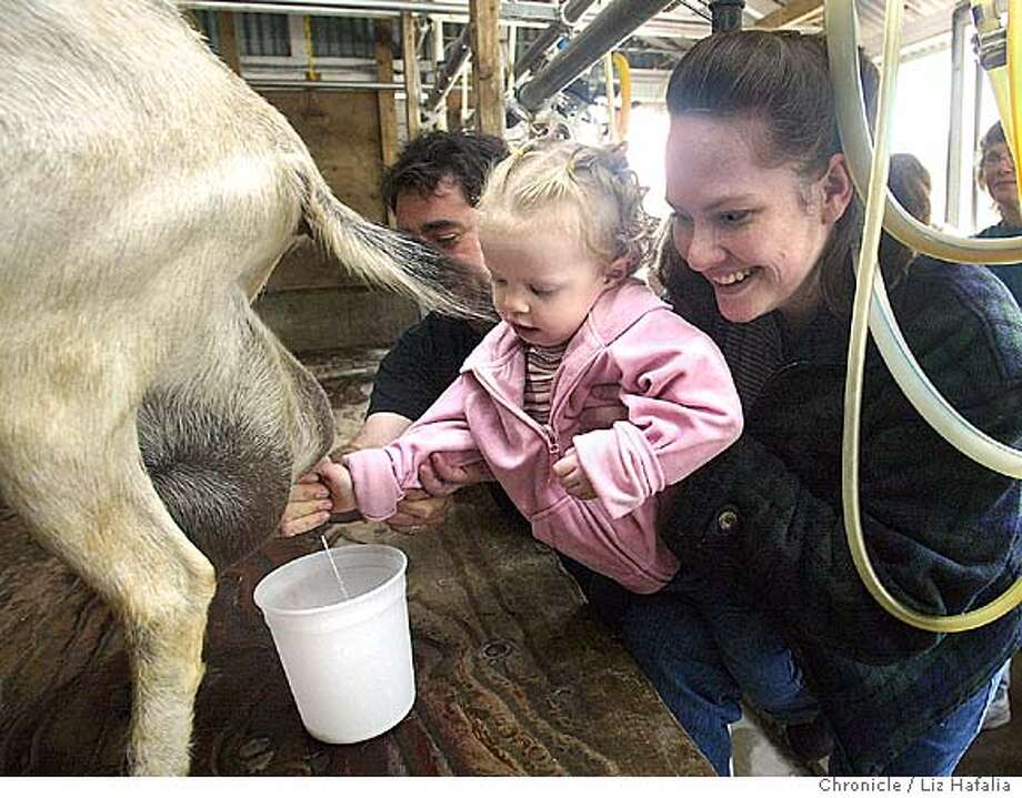 Harley Farms, a goat farm, offers a guided cheesemaking tour. Audrey Reidhead, two years old, gets help from Will Edwards and mom Mindy Reidhead in milking a goat. Shot on 9/18/04 in Pescadero. LIZ HAFALIA / The Chronicle Photo: LIZ HAFALIA