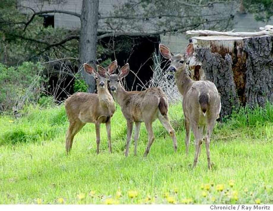 Deer-resistant doesn't mean deer-proof