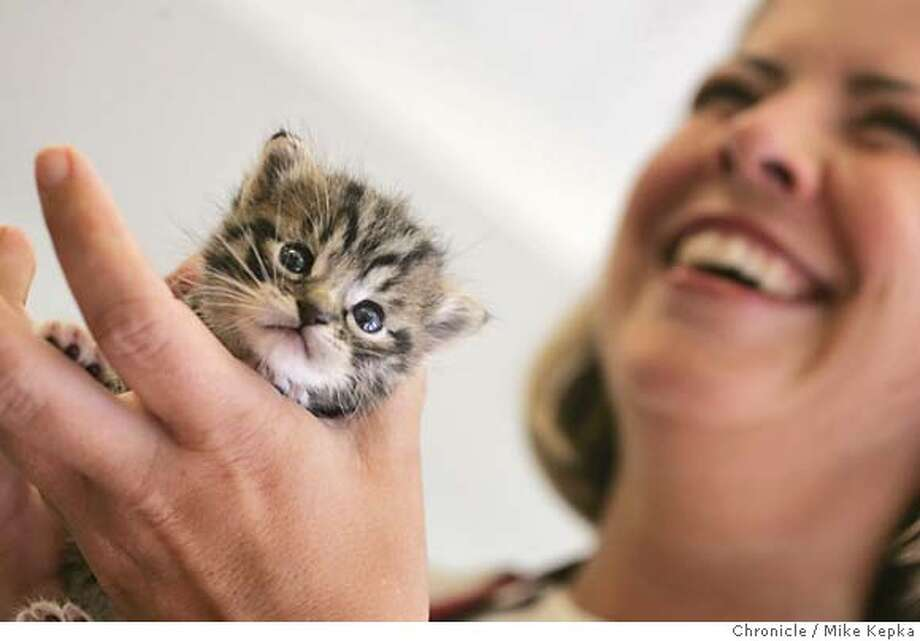 Chronshelter0112_mk.jpg  Eilleen Callanan hold a small kitten waiting to be fostered.  Eileen Callanan of Emeryville now volunteers at the Oakland Animal Shelter once a week and is currently fostering 4 kittens till they are old enough to be adopted since readintg a chronwatch about the matter a month ago.  MIKE KEPKA/The Chronicle MANADATORY CREDIT FOR PHOTOG AND SF CHRONICLE/ -MAGS OUT Metro#Metro#Chronicle#10/06/2004#ALL#Advance##0422374294 Photo: MIKE KEPKA